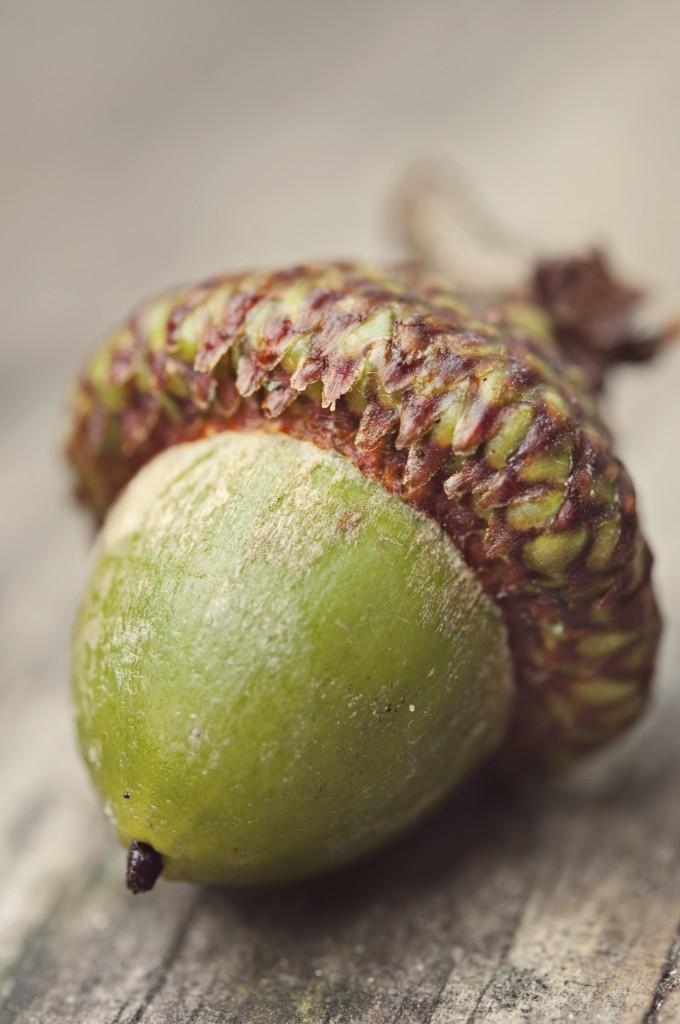 Acorn Monad